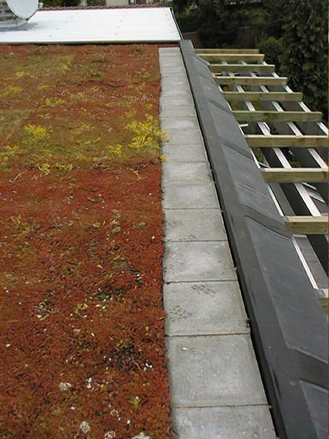 architecture bioclimatique couverture végétalisée